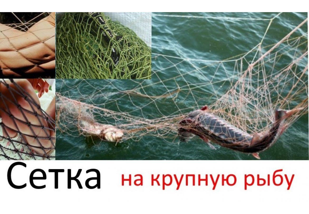 """Сеть """"на крупную рыбу"""""""