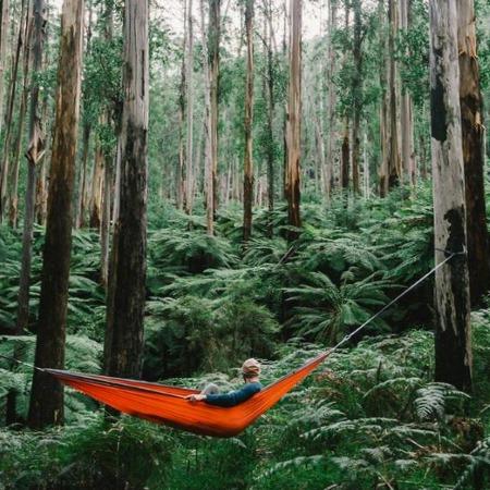 Лесной отдых с гамаком рядом с высокими деревьями