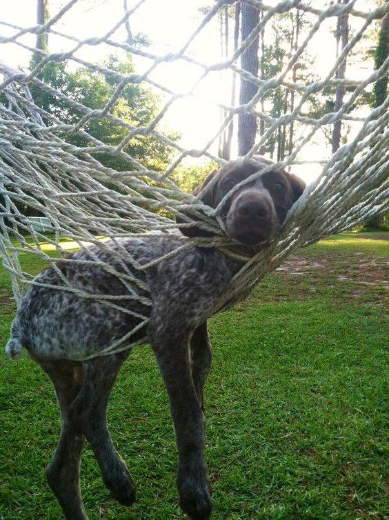 Собака застряла в сетчатом плетеном ложе