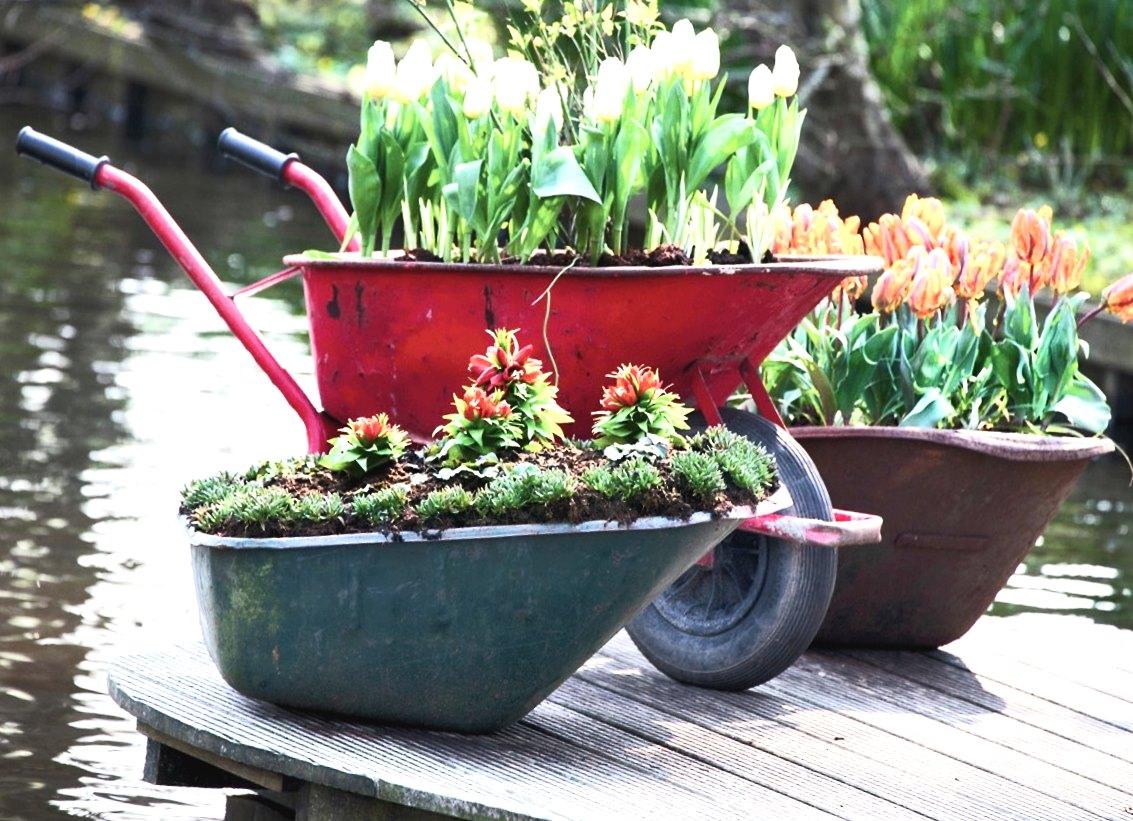 Цветы в садовых тачках и ваннах на дачном участке